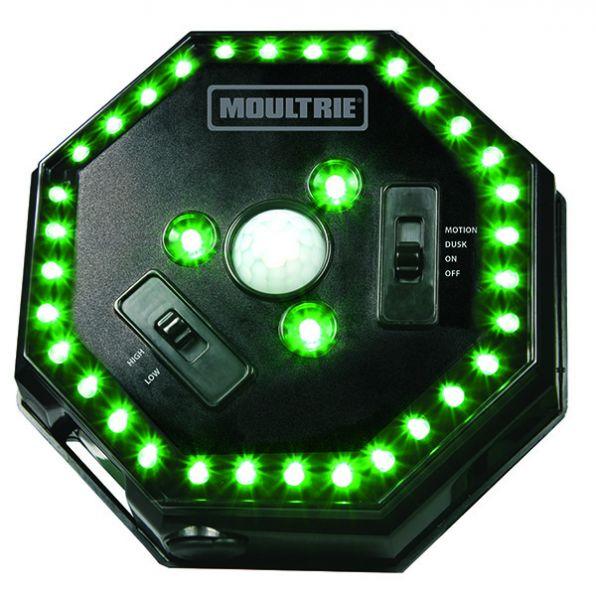 Moultrie Hog Light Kirrungsbeleuchtung
